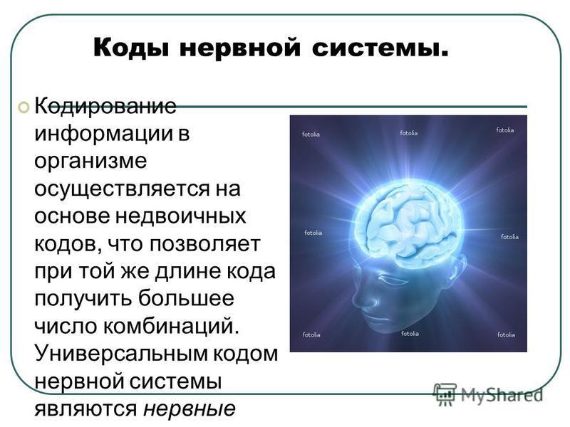 Коды нервной системы. Кодирование информации в организме осуществляется на основе недвоичных кодов, что позволяет при той же длине кода получить большее число комбинаций. Универсальным кодом нервной системы являются нервные импульсы, которые распрост