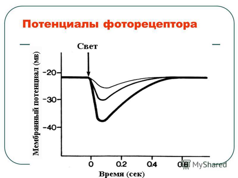 Потенциалы фоторецептора