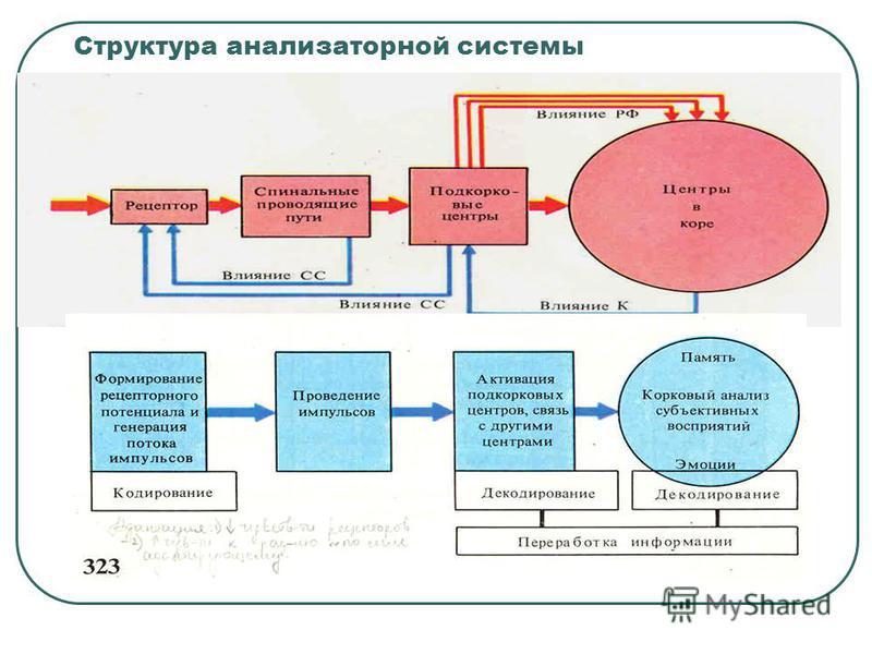 Структура анализаторной системы