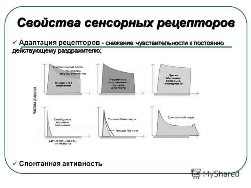 Свойства сенсорных рецепторов снижение чувствительности к постоянно действующему раздражителю; Адаптация рецепторов - снижение чувствительности к постоянно действующему раздражителю; Спонтанная активность