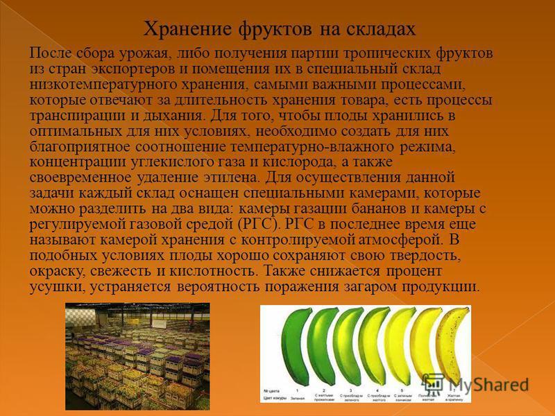 После сбора урожая, либо получения партии тропических фруктов из стран экспортеров и помещения их в специальный склад низкотемпературного хранения, самыми важными процессами, которые отвечают за длительность хранения товара, есть процессы транспираци