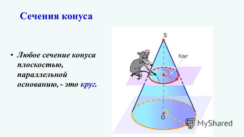 Любое сечение конуса плоскостью, параллельной основанию, - это круг.