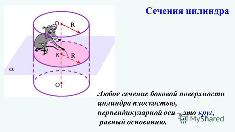 Любое сечение боковой поверхности цилиндра плоскостью, перпендикулярной оси – это круг, равный основанию. Сечения цилиндра