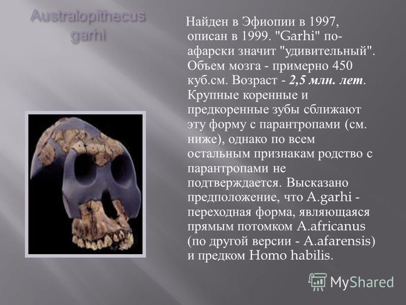 Australopithecus garhi Найден в Эфиопии в 1997, описан в 1999.