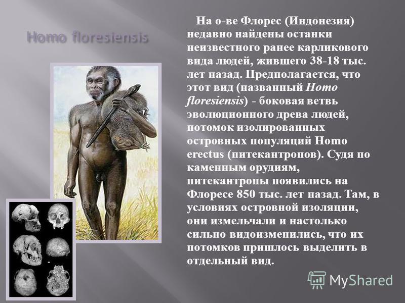 Homo floresiensis На о - ве Флорес ( Индонезия ) недавно найдены останки неизвестного ранее карликового вида людей, жившего 38-18 тыс. лет назад. Предполагается, что этот вид ( названный Homo floresiensis ) - боковая ветвь эволюционного древа людей,
