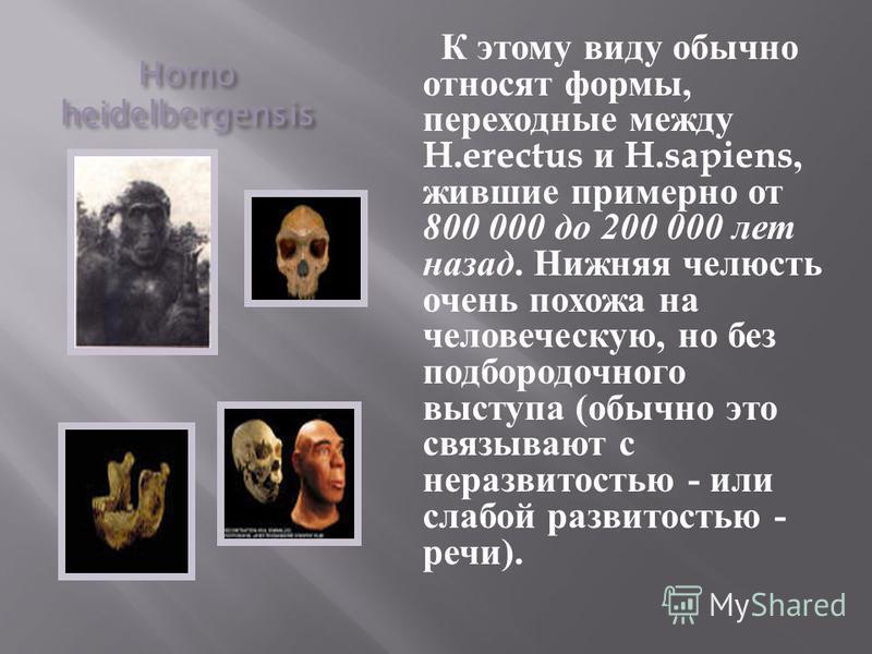 Homo heidelbergensis К этому виду обычно относят формы, переходные между H.erectus и H.sapiens, жившие примерно от 800 000 до 200 000 лет назад. Нижняя челюсть очень похожа на человеческую, но без подбородочного выступа ( обычно это связывают с нераз
