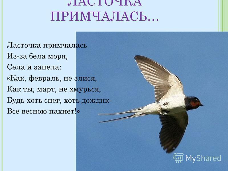 ЛАСТОЧКА ПРИМЧАЛАСЬ… Ласточка примчалась Из-за бела моря, Села и запела: «Как, февраль, не злится, Как ты, март, не хмурься, Будь хоть снег, хоть дождик- Все весною пахнет!»