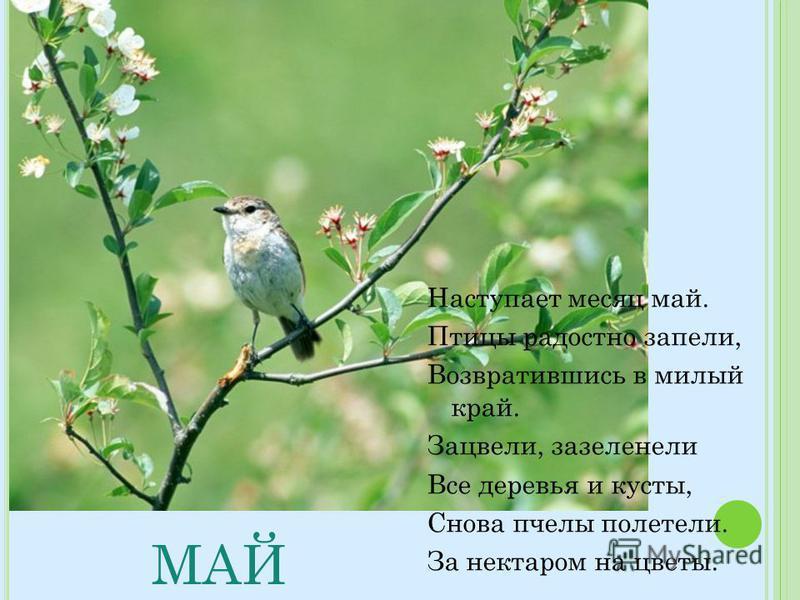 МАЙ Наступает месяц май. Птицы радостно запели, Возвратившись в милый край. Зацвели, зазеленели Все деревья и кусты, Снова пчелы полетели. За нектаром на цветы.