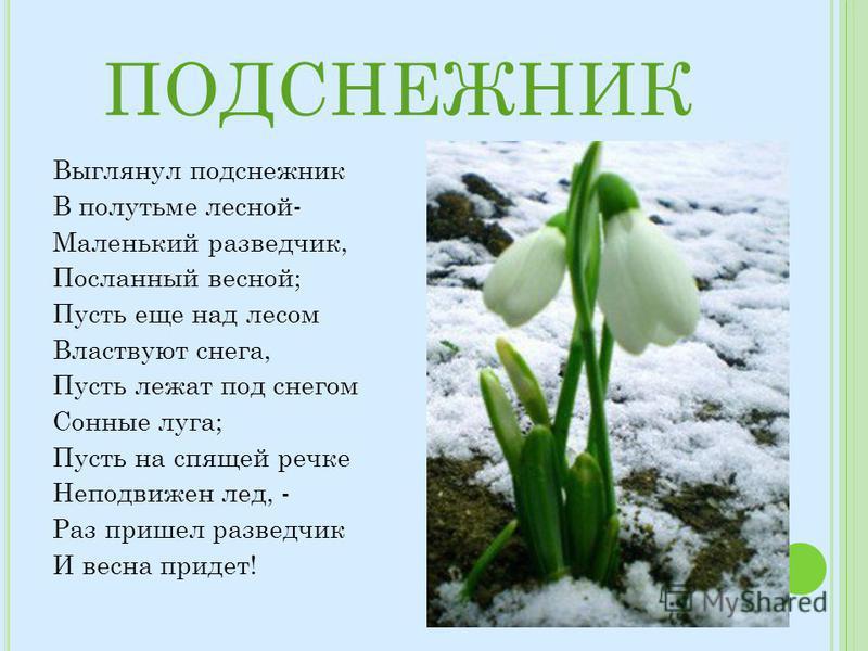 ПОДСНЕЖНИК Выглянул подснежник В полутьме лесной- Маленький разведчик, Посланный весной; Пусть еще над лесом Властвуют снега, Пусть лежат под снегом Сонные луга; Пусть на спящей речке Неподвижен лед, - Раз пришел разведчик И весна придет!