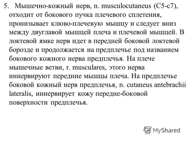 5. Мышечно-кожный нерв, n. musculocutaneus (C5-c7), отходит от бокового пучка плечевого сплетения, пронизывает клюво-плечевую мышцу и следует вниз между двуглавой мышцей плеча и плечевой мышцей. В локтевой ямке нерв идет в передней боковой локтевой б