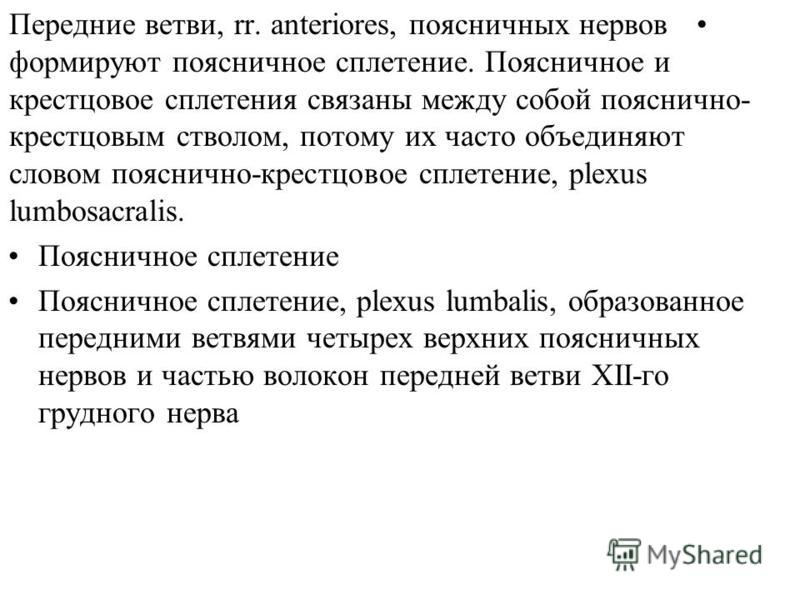 Передние ветви, rr. anteriores, поясничных нервов формируют поясничное сплетение. Поясничное и крестцовое сплетения связаны между собой пояснично- крестцовым стволом, потому их часто объединяют словом пояснично-крестцовое сплетение, plexus lumbosacra