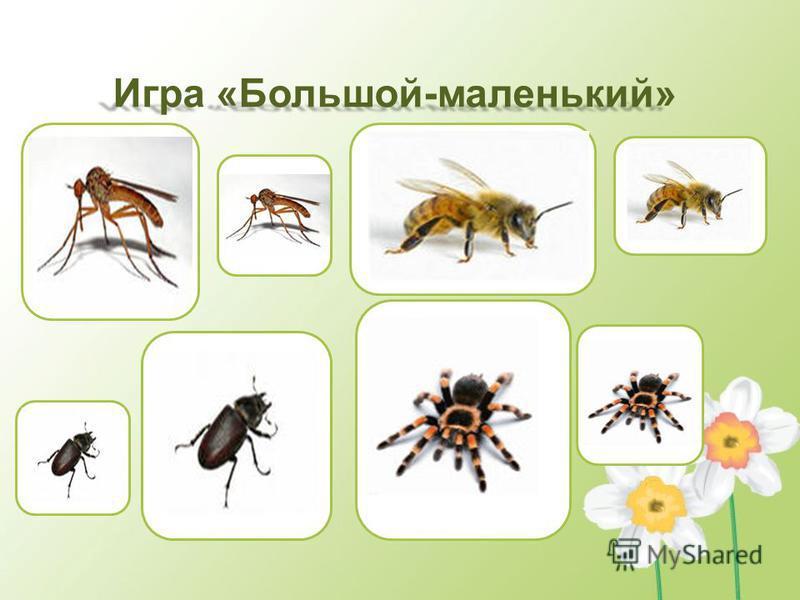 Картинки бык и муха
