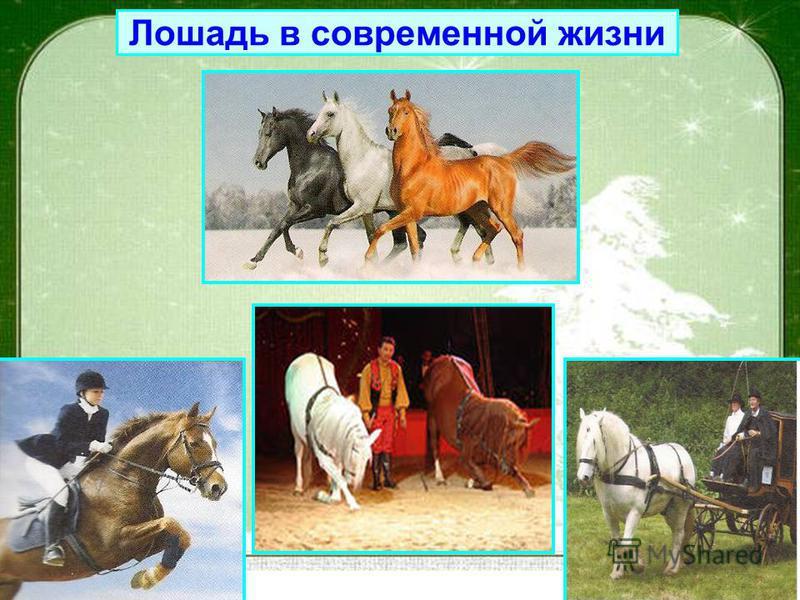 Лошадь в современной жизни