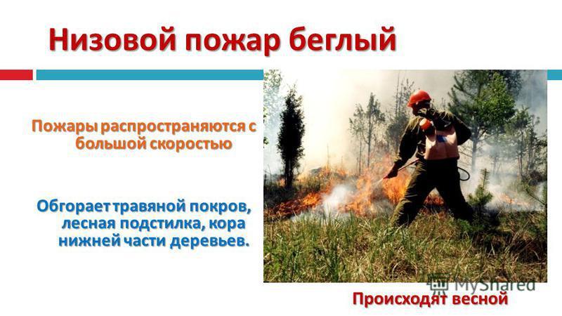 Низовой пожар беглый Пожары распространяются с большой скоростью Обгорает травяной покров, лесная подстилка, кора нижней части деревьев. Происходят весной