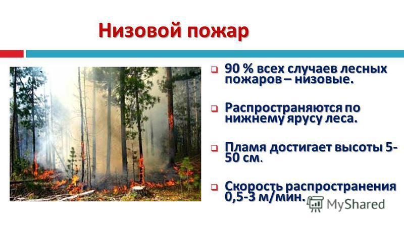 Низовой пожар 90 % всех случаев лесных пожаров – низовые. 90 % всех случаев лесных пожаров – низовые. Распространяются по нижнему ярусу леса. Распространяются по нижнему ярусу леса. Пламя достигает высоты 5- 50 см. Пламя достигает высоты 5- 50 см. Ск