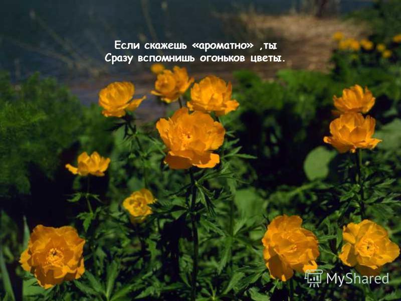 Если скажешь «ароматно»,ты Сразу вспомнишь огоньков цветы.
