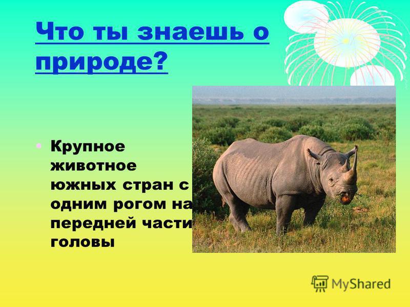 Что ты знаешь о природе? Крупное животное южных стран с одним рогом на передней части головы