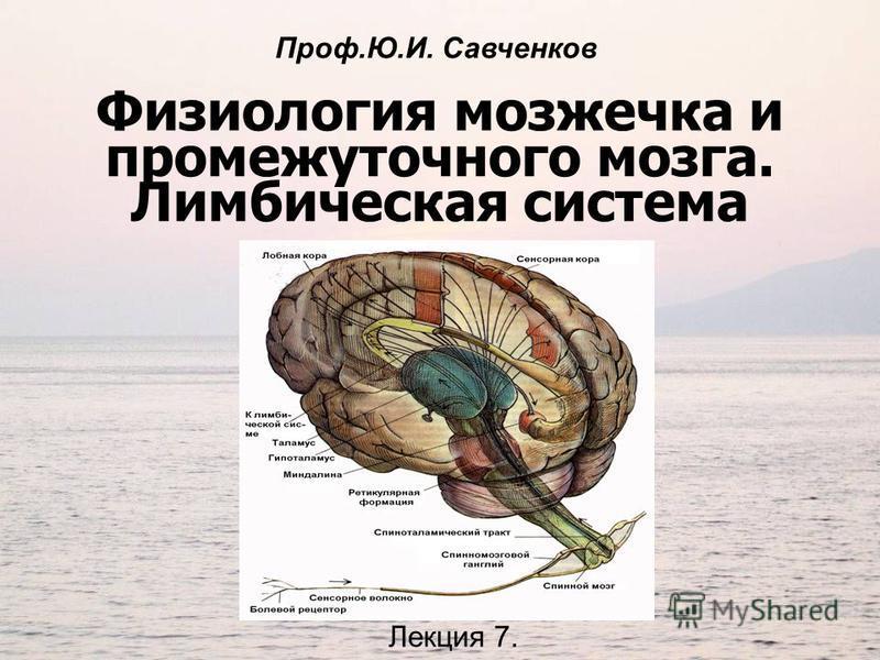 Физиология мозжечка и промежуточного мозга. Лимбическая система Лекция 7. Проф.Ю.И. Савченков