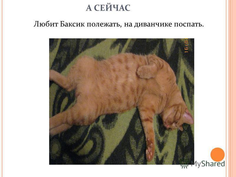 А СЕЙЧАС Любит Баксик полежать, на диванчике поспать.