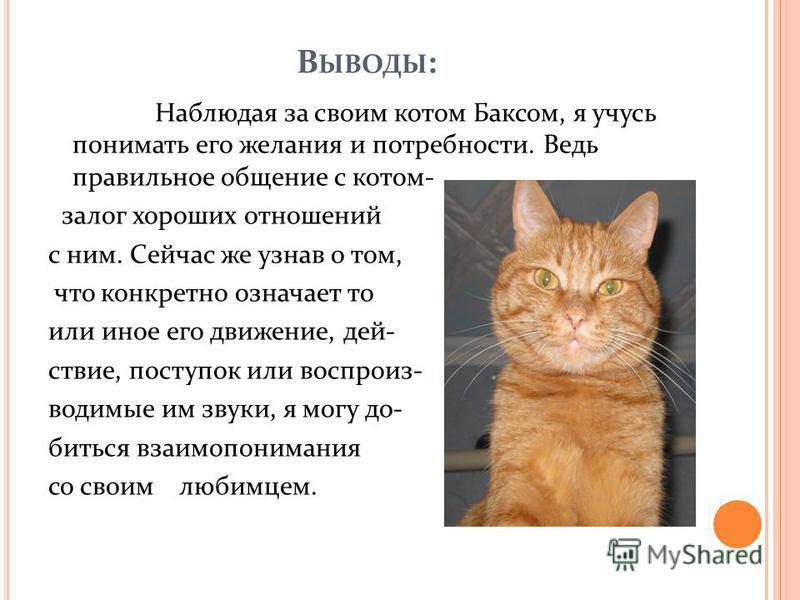В ЫВОДЫ : Наблюдая за своим котом Баксом, я учусь понимать его желания и потребности. Ведь правильное общение с котом- залог хороших отношений с ним. Сейчас же узнав о том, что конкретно означает то или иное его движение, действие, поступок или воспр