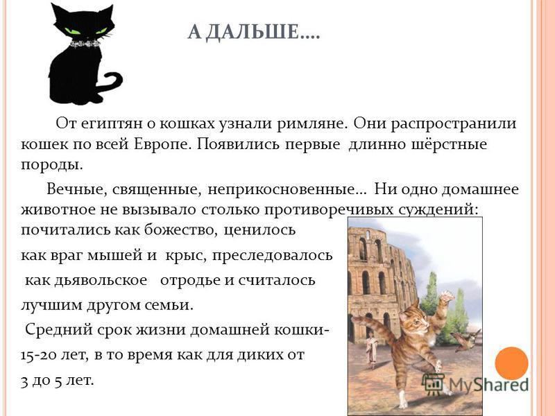 А ДАЛЬШЕ…. От египтян о кошках узнали римляне. Они распространили кошек по всей Европе. Появились первые длинно шёрстные породы. Вечные, священные, неприкосновенные… Ни одно домашнее животное не вызывало столько противоречивых суждений: почитались ка