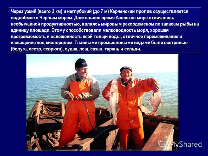 Через узкий (всего 3 км) и неглубокий (до 7 м) Керченский пролив осуществляется водообмен с Черным морем. Длительное время Азовское море отличалось необычайной продуктивностью, являясь мировым рекордсменом по запасам рыбы на единицу площади. Этому сп
