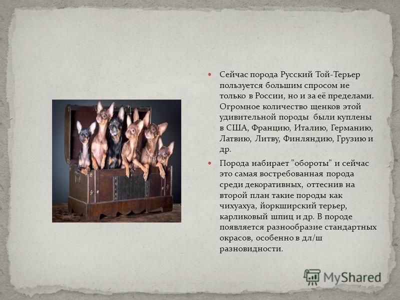 Сейчас порода Русский Той-Терьер пользуется большим спросом не только в России, но и за её пределами. Огромное количество щенков этой удивительной породы были куплены в США, Францию, Италию, Германию, Латвию, Литву, Финляндию, Грузию и др. Порода наб