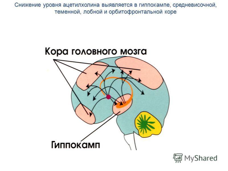 Снижение уровня ацетилхолина выявляется в гиппокампе, средне височной, теменной, лобной и орбитофронтальной коре