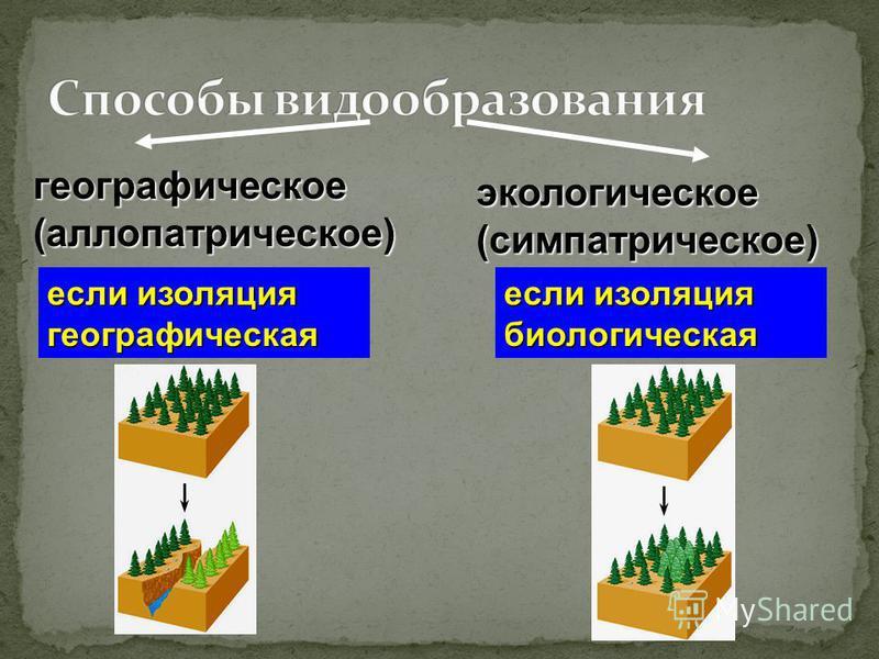 географическое(аллопатрическое) экологическое(симпатрическое) если изоляция географическая если изоляция биологическая