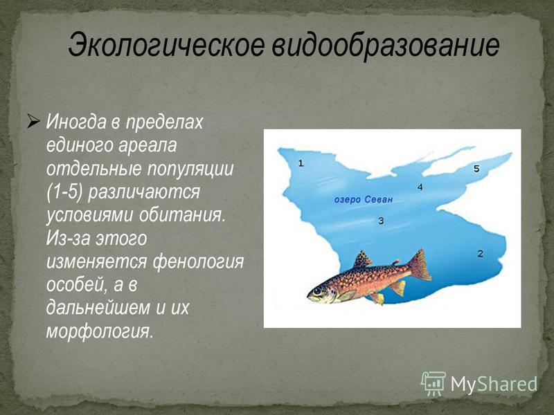 Экологическое видообразование Иногда в пределах единого ареала отдельные популяции (1-5) различаются условиями обитания. Из-за этого изменяется фенология особей, а в дальнейшем и их морфология.