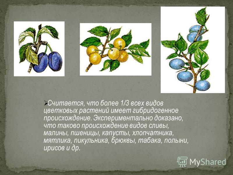 Считается, что более 1/3 всех видов цветковых растений имеет гибридогенное происхождение. Экспериментально доказано, что таково происхождение видов сливы, малины, пшеницы, капусты, хлопчатника, мятлика, пикульника, брюквы, табака, полыни, ирисов и др