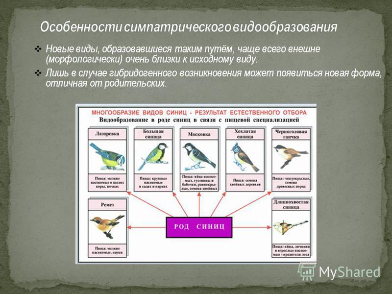 Новые виды, образовавшиеся таким путём, чаще всего внешне (морфологически) очень близки к исходному виду. Лишь в случае гибридогенного возникновения может появиться новая форма, отличная от родительских.