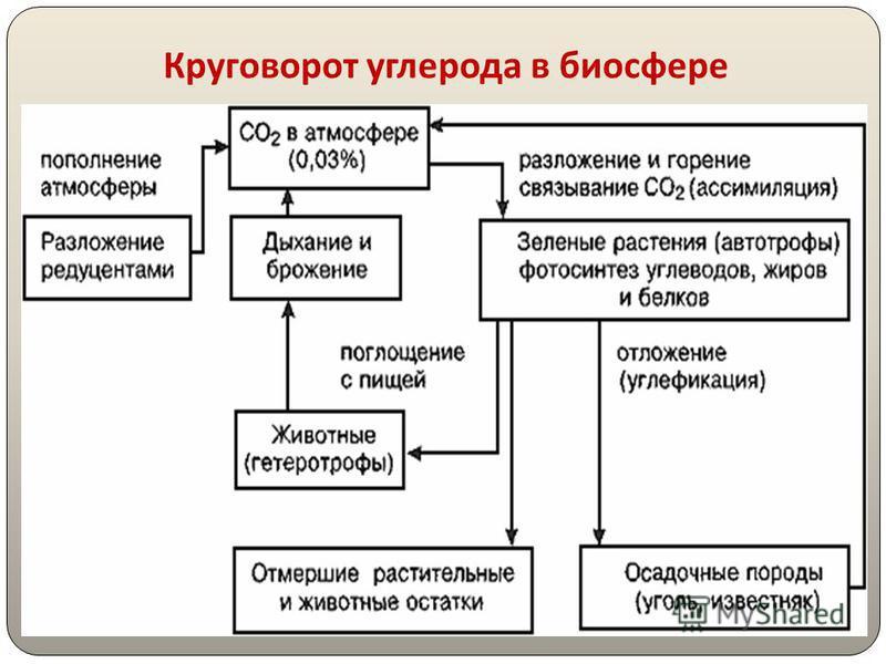 Схема круговорота углерода в биосфере фото 241