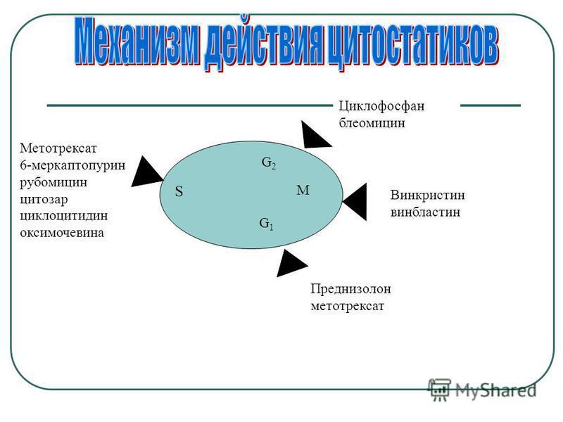 Метотрексат 6-меркаптопурин рубомицин цитозар циклоцитидин оксимочевина G 2 S M G1G1 Циклофосфан блеомицин Винкристин винбластин Преднизолон метотрексат