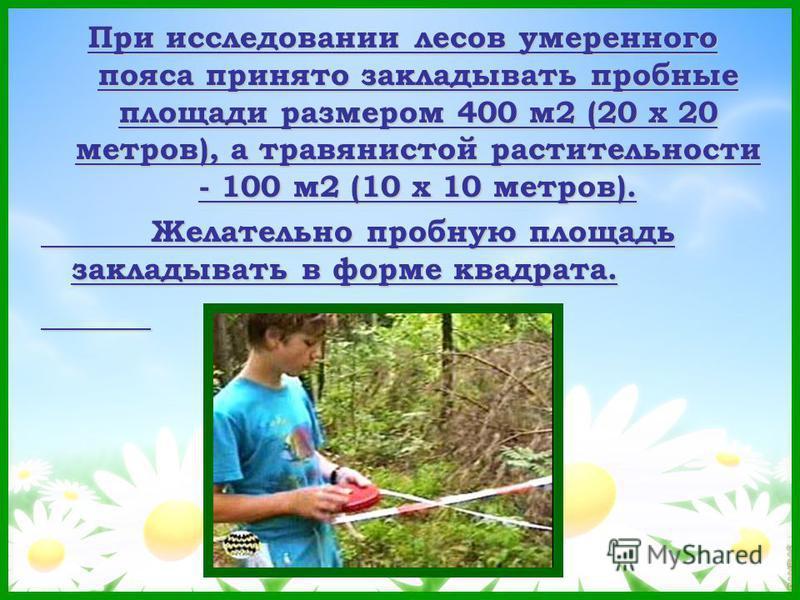 При исследовании лесов умеренного пояса принято закладывать пробные площади размером 400 м 2 (20 х 20 метров), а травянистой растительности - 100 м 2 (10 х 10 метров). Желательно пробную площадь закладывать в форме квадрата.