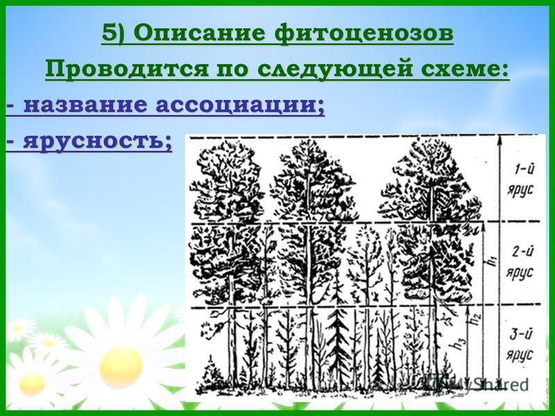 5) Описание фитоценозов Проводится по следующей схеме: - название ассоциации; - ярусность;