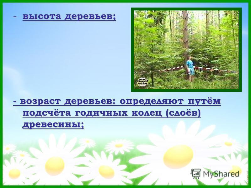 - высота деревьев; - возраст деревьев: определяют путём подсчёта годичных колец (слоёв) древесины;