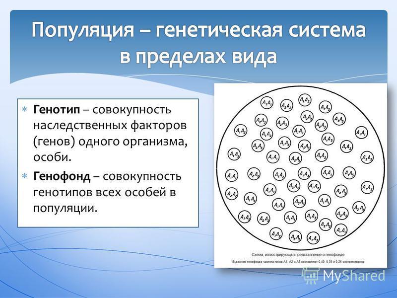 Генотип – совокупность наследственных факторов (генов) одного организма, особи. Генофонд – совокупность генотипов всех особей в популяции.