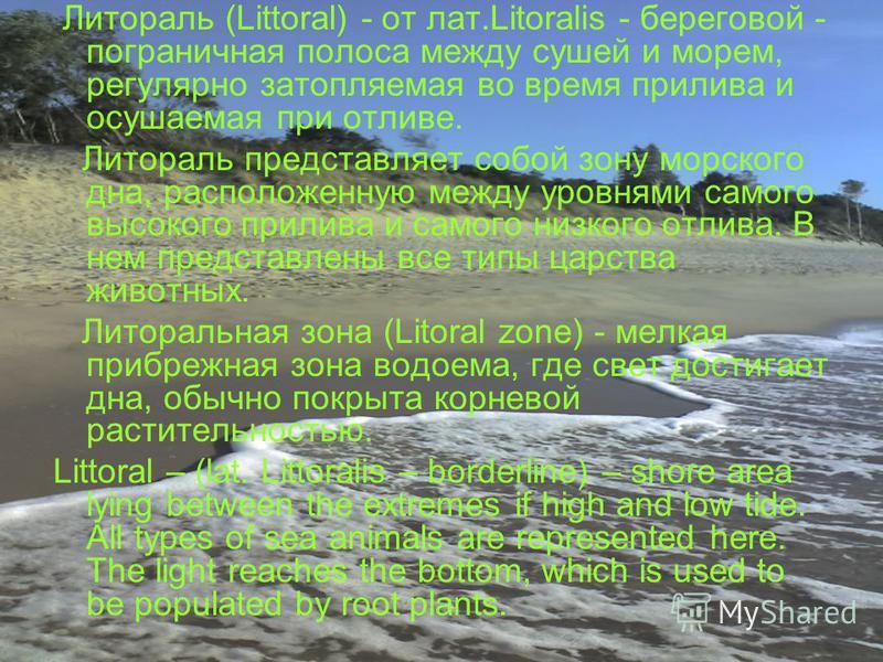 Литораль (Littoral) - от лат.Litoralis - береговой - пограничная полоса между сушей и морем, регулярно затопляемая во время прилива и осушаемая при отливе. Литораль представляет собой зону морского дна, расположенную между уровнями самого высокого пр