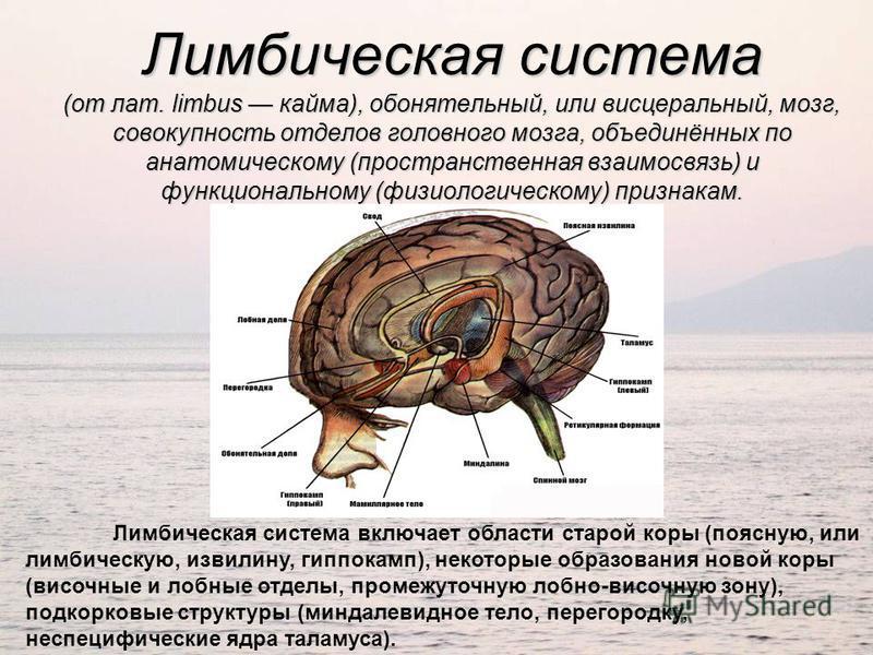 Лимбическая система (от лат. limbus кайма), обонятельный, или висцеральный, мозг, совокупность отделов головного мозга, объединённых по анатомическому (пространственная взаимосвязь) и функциональному (физиологическому) признакам. Лимбическая система