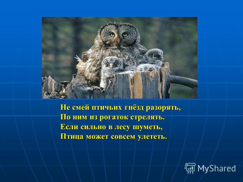 Не смей птичьих гнёзд разорять, По ним из рогаток стрелять. Если сильно в лесу шуметь, Птица может совсем улететь.