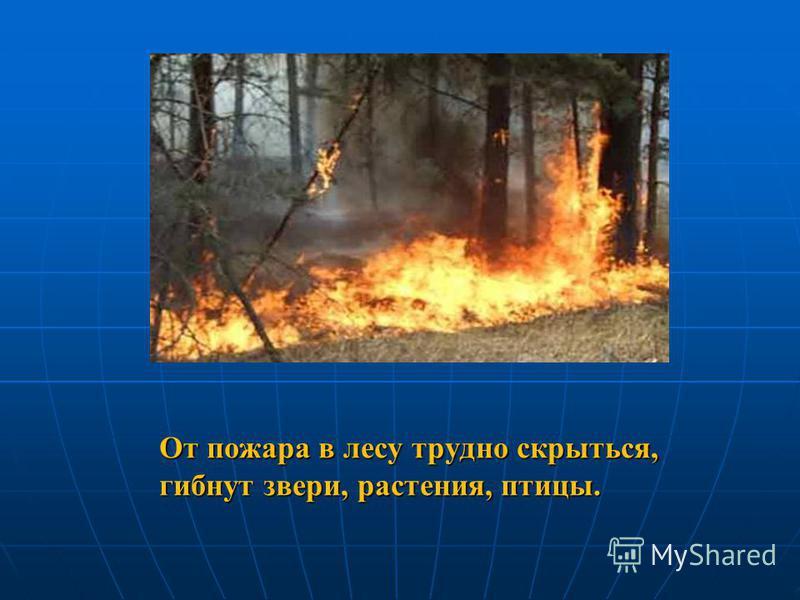 От пожара в лесу трудно скрыться, гибнут звери, растения, птицы.