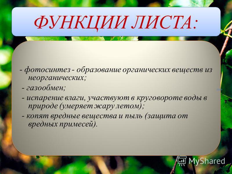 ФУНКЦИИ ЛИСТА: - фотосинтез - образование органических веществ из неорганических; - газообмен; - испарение влаги, участвуют в круговороте воды в природе (умеряет жару летом); - копят вредные вещества и пыль (защита от вредных примесей). - фотосинтез