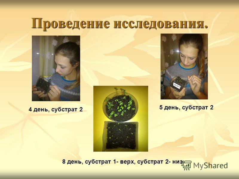 Проведение исследования. 4 день, субстрат 2 5 день, субстрат 2 8 день, субстрат 1- верх, субстрат 2- низ