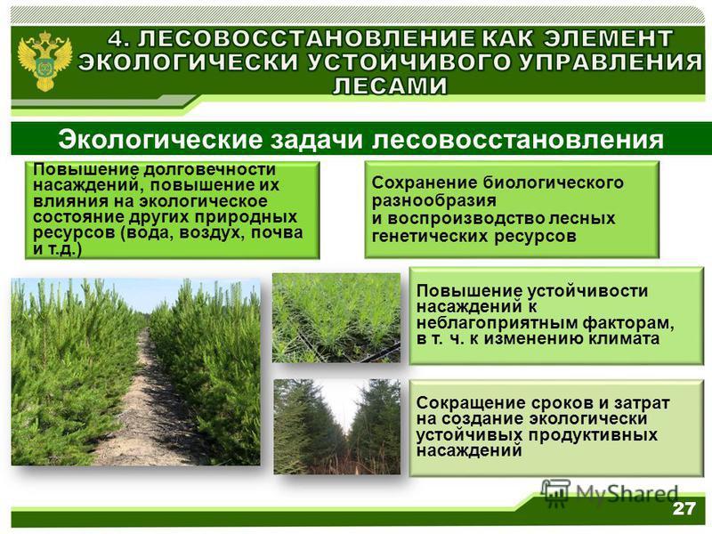 Повышение долговечности насаждений, повышение их влияния на экологическое состояние других природных ресурсов (вода, воздух, почва и т.д.) Сохранение биологического разнообразия и воспроизводство лесных генетических ресурсов Экологические задачи лесо