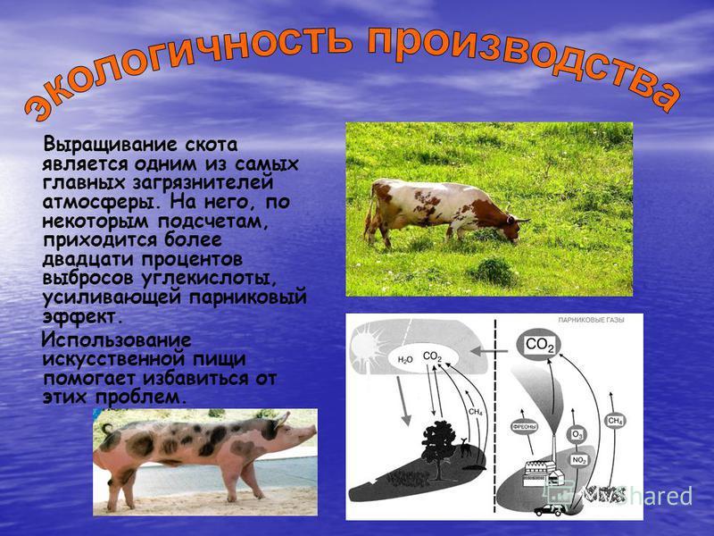 Выращивание скота является одним из самых главных загрязнителей атмосферы. На него, по некоторым подсчетам, приходится более двадцати процентов выбросов углекислоты, усиливающей парниковый эффект. Использование искусственной пищи помогает избавиться