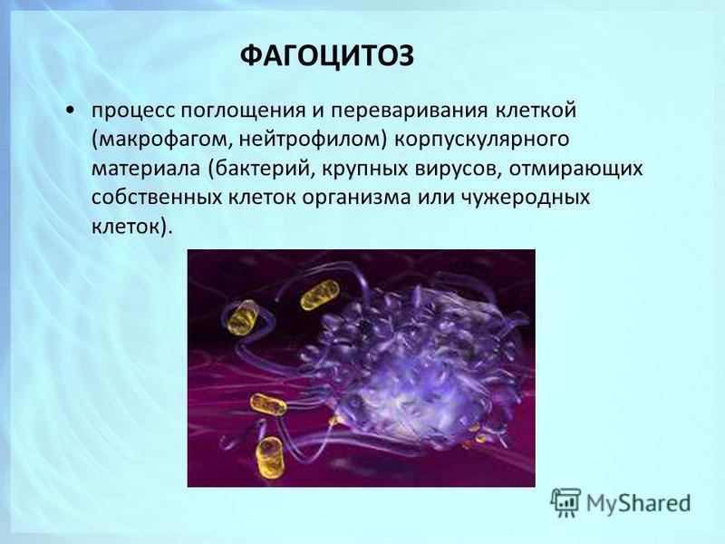 ФАГОЦИТОЗ процесс поглощения и переваривания клеткой (макрофагом, нейтрофилом) корпускулярного материала (бактерий, крупных вирусов, отмирающих собственных клеток организма или чужеродных клеток).