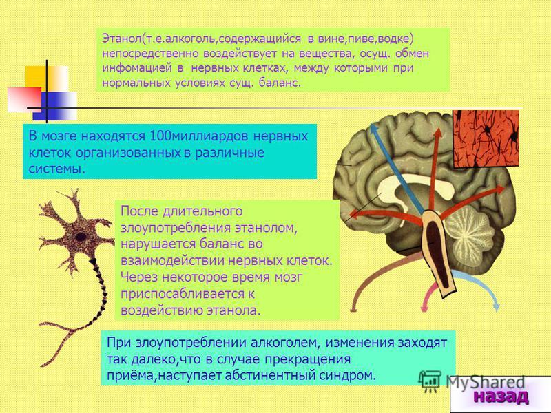 В м о з г е При курении никотин из сигареты всасывается в кровь и разносится по организму. В мозге находятся нервные клетки с рецепторами для никотина. Никотин-яд, на который организм реагирует тошнотой и рвотой. Чтобы справится с ядом, мозг вырабаты