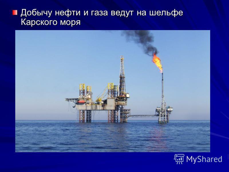 Добычу нефти и газа ведут на шельфе Карского моря