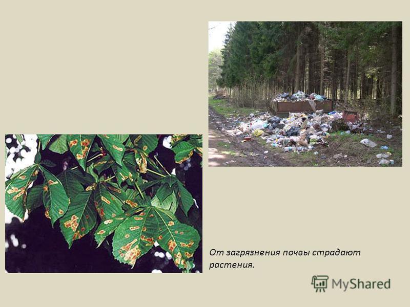 От загрязнения почвы страдают растения.
